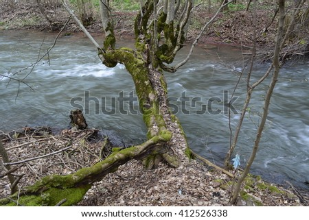 old wood above the river