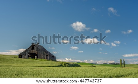 Old wood barn in the middle of a wheat field