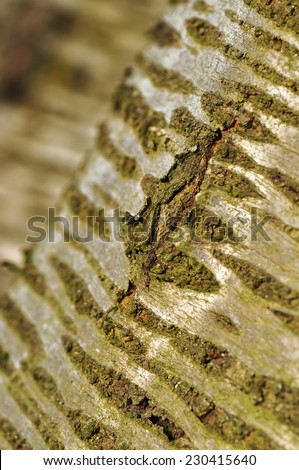 Old Wood (rind,bark). Tree Texture Background.  Pattern.  - stock photo