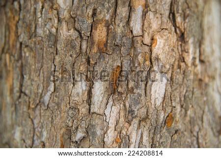 Old Wood(rind,bark) Tree Texture Background Pattern,Tree bark texture,  - stock photo