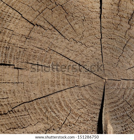 old wood texture background, trunk od tree with cross section and wood rings - stock photo