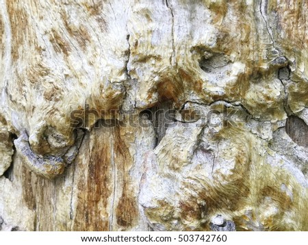 Old Wood texture, Bark texture for the background or text