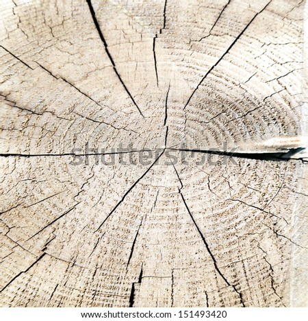 old wood texture bright background, trunk od tree with cross section and wood rings - stock photo