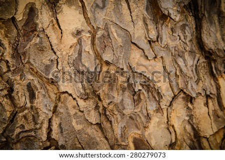 Old wood tree background or texture. Tree bark