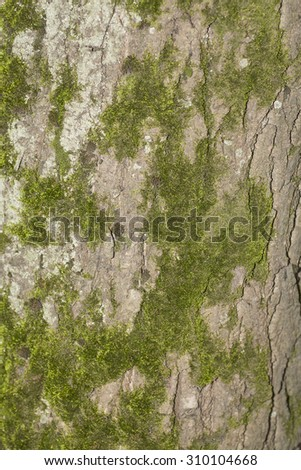Old wood tree background or texture. Tree bark - stock photo