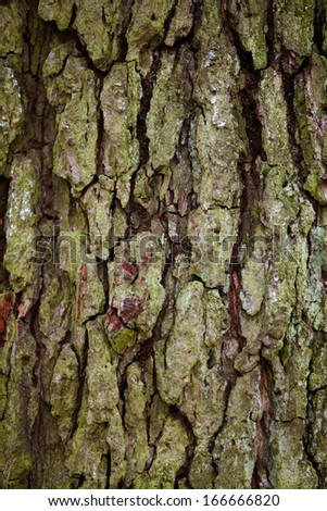Old wood tree bark with green moss detail texture background - stock photo
