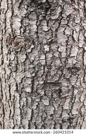 Old Wood Tree Texture Background Pattern close-up - stock photo