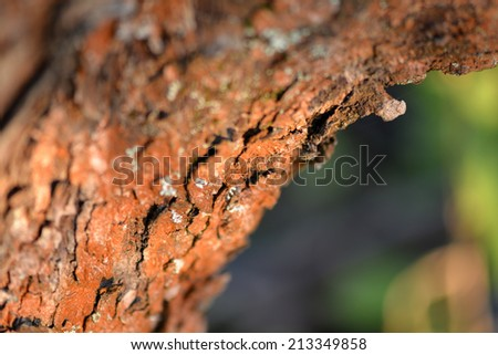 Old Wood Tree Texture Background Pattern, selective focus