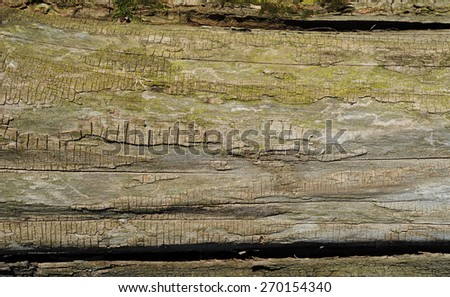 Old Wood Tree Texture Background Pattern with Copy Space - stock photo