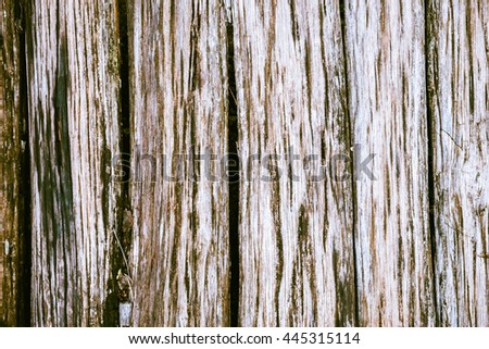 Old wood with fern for vintage background