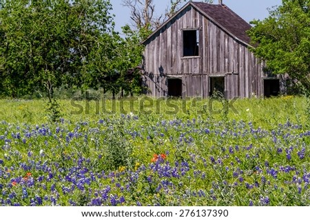 Old Wooden Barn in a Texas Field of Wildflowers - stock photo