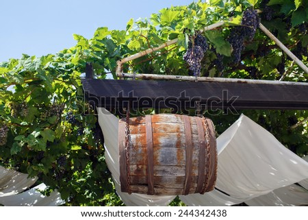 Old wooden barrel hanging on rusty chains among the vines. - stock photo