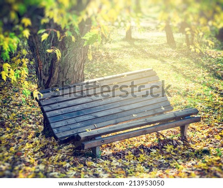 old wooden bench in sunny autumn park - stock photo