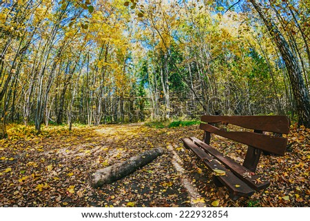 old wooden bench in the autumn park. photographed on a fisheye lens.