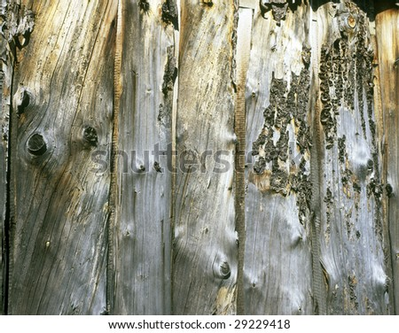 Old wooden boards wall with knots and lichen
