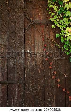 old wooden door background - stock photo