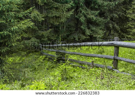 Old wooden fence and green grass, coniferous forest
