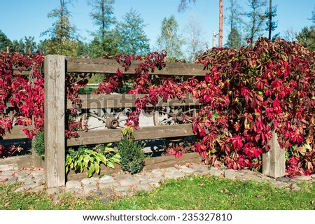 old wooden fence tightened autumn leaves - stock photo
