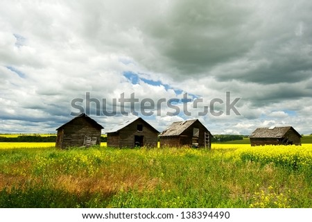 old wooden granaries in a canola field - stock photo