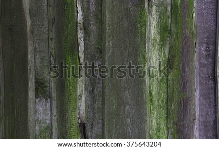 old wooden planks with green moss, the old barn, texture - stock photo