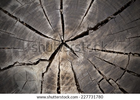 Old wooden tree stump with large cracks and age rings - stock photo