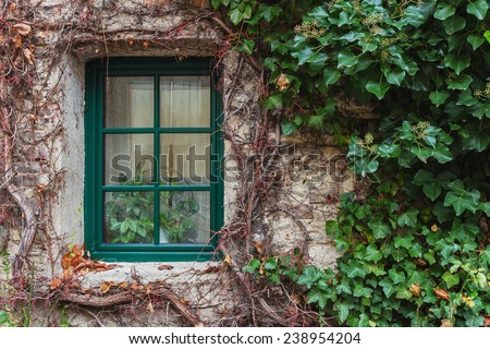 Old wooden window overgrown with ivy in fall colors, Czech - stock photo