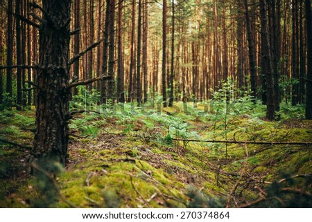 Old World War Trenches In Forest Since Second World War In Belarus - stock photo
