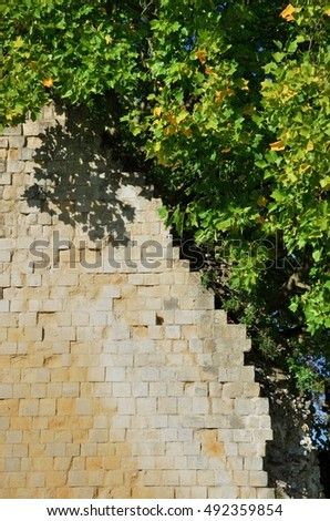 old yellow brick walls and leaves