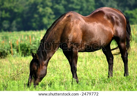 Older Horse Enjoying Retirement in a New Jersey Meadow. - stock photo