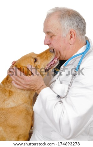 older male Veterinarian checking out a  labrador mix, isolated on white - stock photo