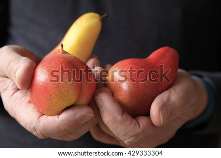 Older man holding three colorful pears in his hands - stock photo