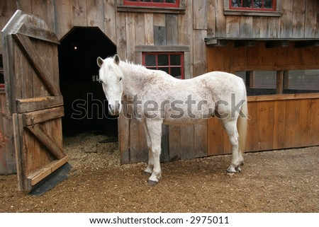 older white horse in front of stable
