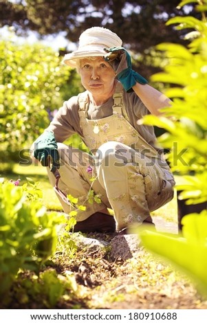 Older woman working in garden feeling tired. Senior woman stopping for a rest while gardening in backyard - stock photo