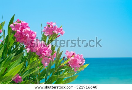 Oleander flowers at the beach. Blue sky and mediterranian sea. - stock photo