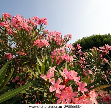 Top 28 Mediterranean Flowers And Plants Garden Design