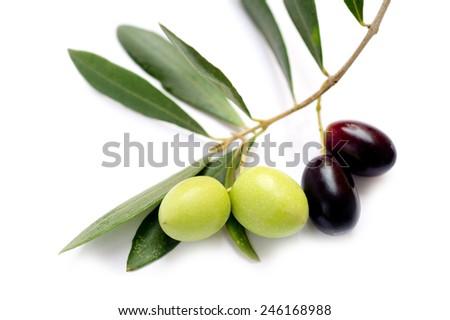 olive branch - stock photo