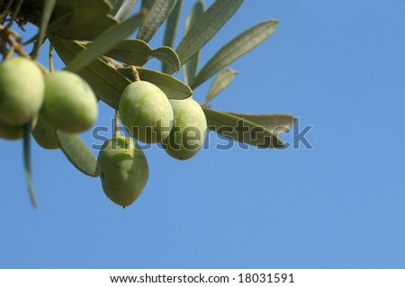 Olive branch against blue sky
