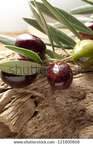 olive branch on old olive tree - stock photo