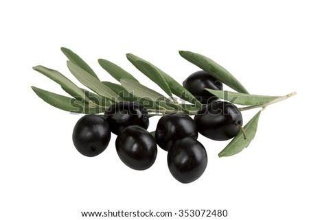 olive branch with black olives on white background isolated - stock photo
