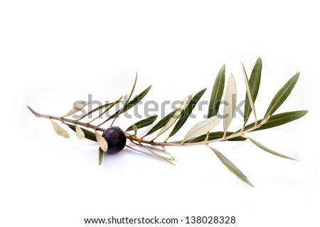 Olive branch with green leaves and one olive on a white background. Isolated. - stock photo