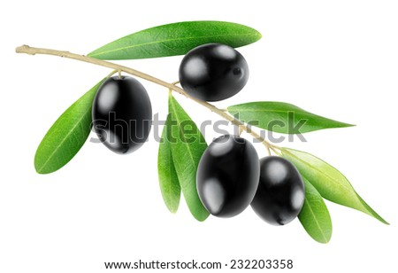 Olive branch with leaves and black fruits isolated on white, with clipping path - stock photo