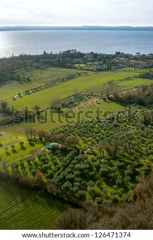 olive fields on coast of garda lake, desencano, italy