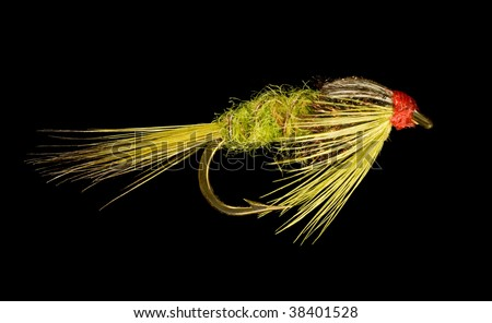 Olive Green Nymph Trout Fishing Fly Isolated on Black Background - stock photo