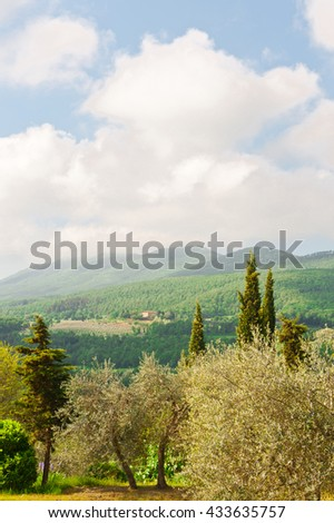 Olive Grove on the Slopes of the Apennine Mountains, Italy