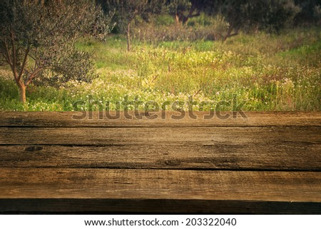 Olive grove. Wood empty table with ripe olive trees in the background. Nature background - stock photo