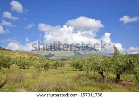 olive groves in Jaen and Sierra Magina, andalucia - stock photo