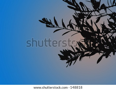 Olive leaves silhouetted against a sunset sky.