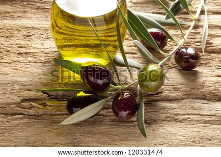 olive oil and olive branch backlit on old olive tree - stock photo