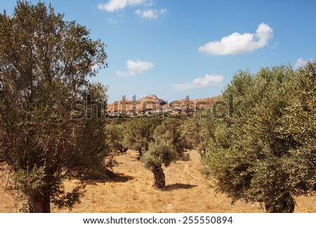 Olive Plantation with white village, Filoti, and mountains. Focus on Filoti Village. This region of Tragea, in Naxos island, is the biggest olive cultivation area of the Cyclades, Greece.  - stock photo
