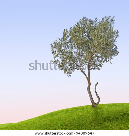 Olive tree at meadow